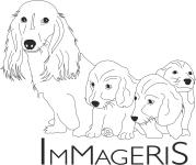 Immageris FCI