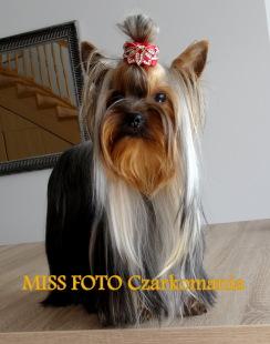 MISS FOTO